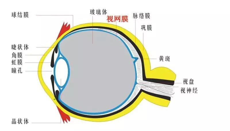 西安哪家医院治疗视网膜脱离好 普瑞眼科告诉您如何治疗视网膜脱离